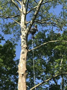 Tree Trimming Service in Tennessee.