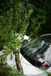 Emergency tree service for storms and disasters