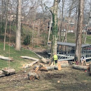 Cutting trees and clearing land in Tn