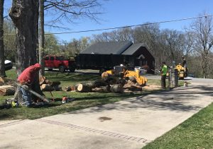 Tree Removal in a residential lot.