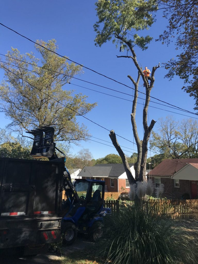 Professional tree services in Tennessee