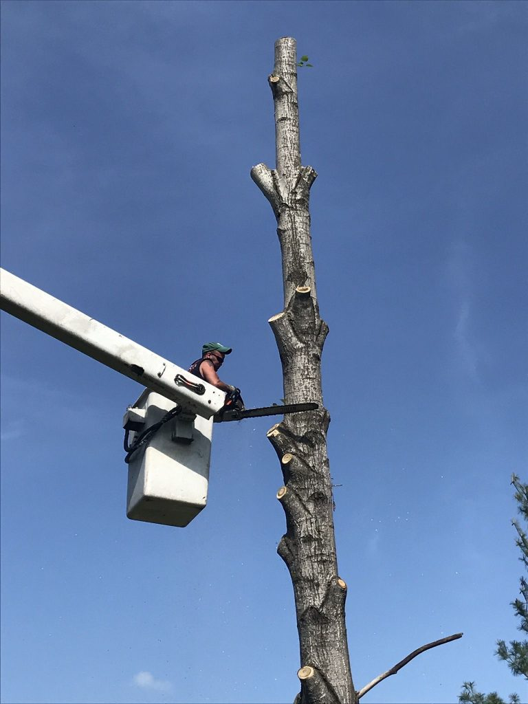 Tree cutting services in Tennessee